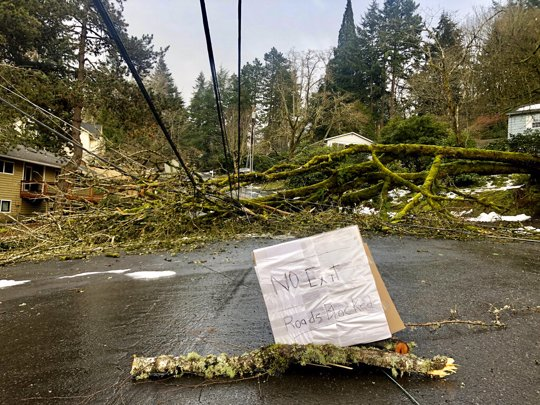 A large tree downed in an ice storm sits atop power lines in Lake Oswego, Ore. Nearly 150,000 customers lost power.