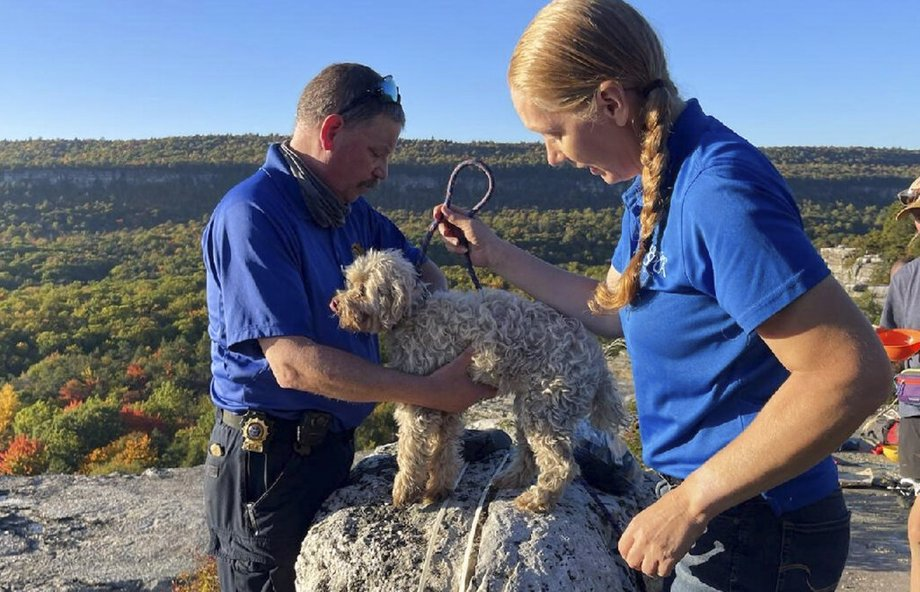 Dog rescued from crevice in New York