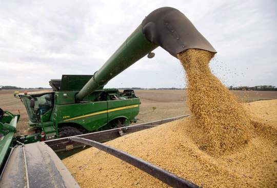 Soybeans offloaded from combine
