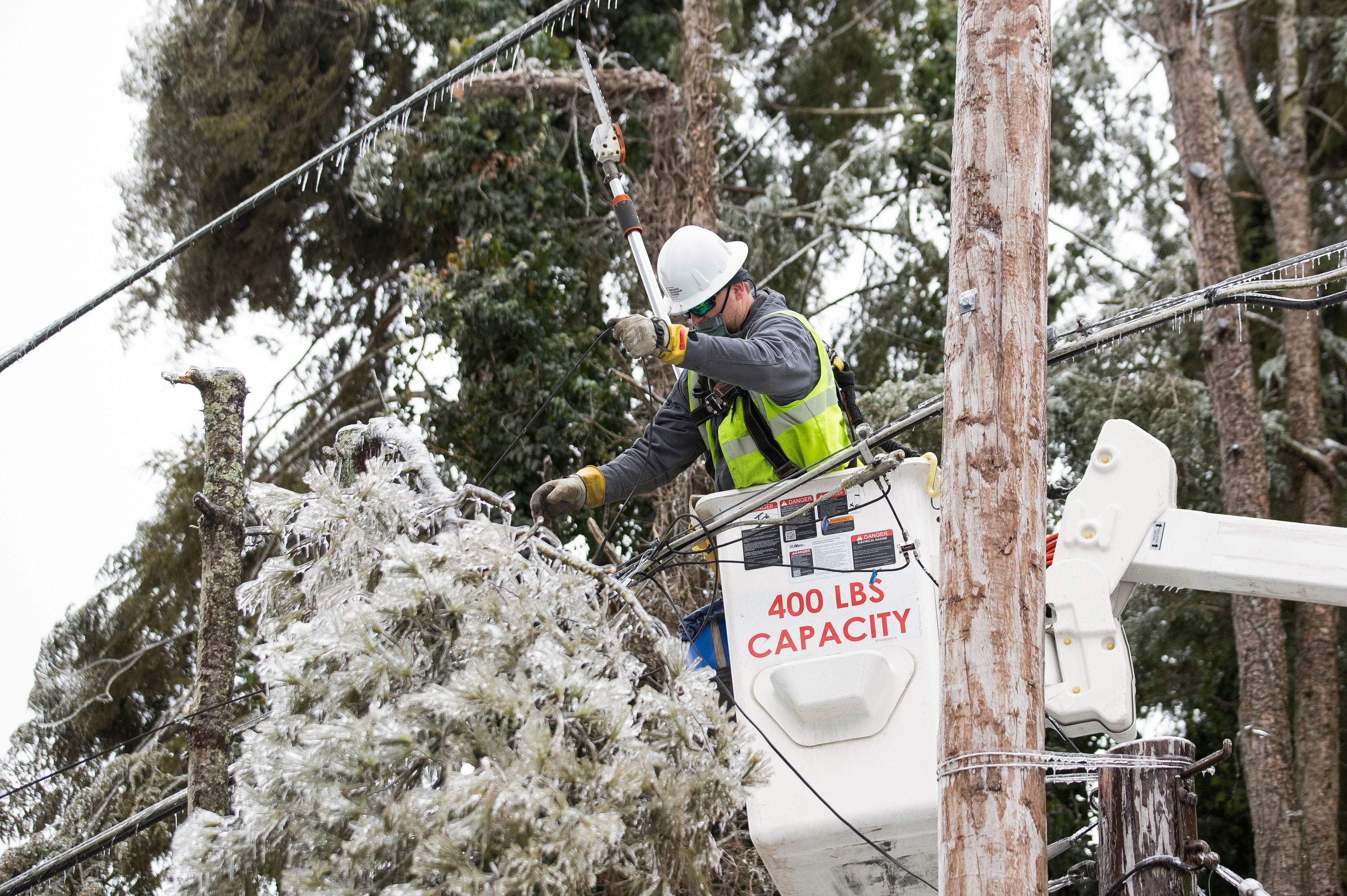 worker cuts tree branches from a power line