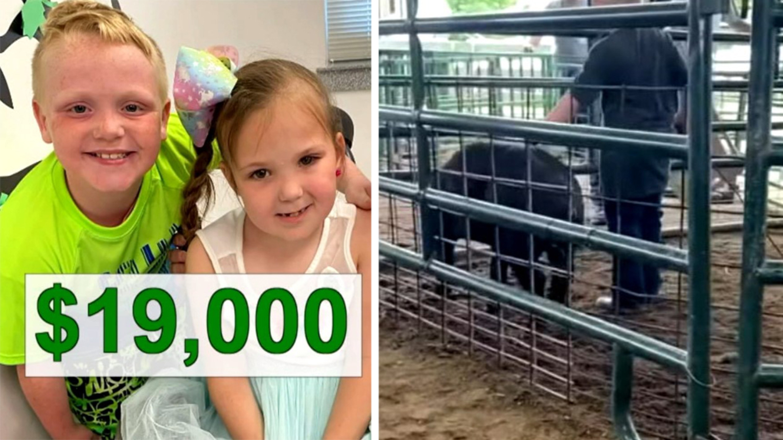 Split screen with a pair of children and a hog in a cage